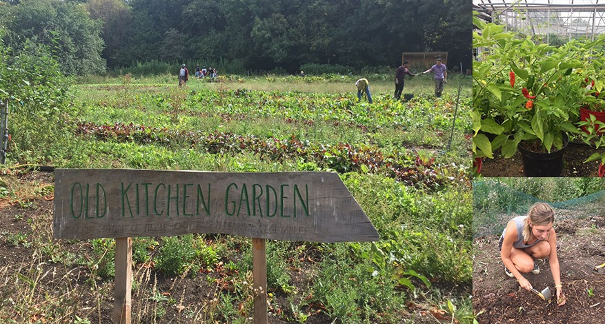 Outdoor and indoor produce growing at Organiclea