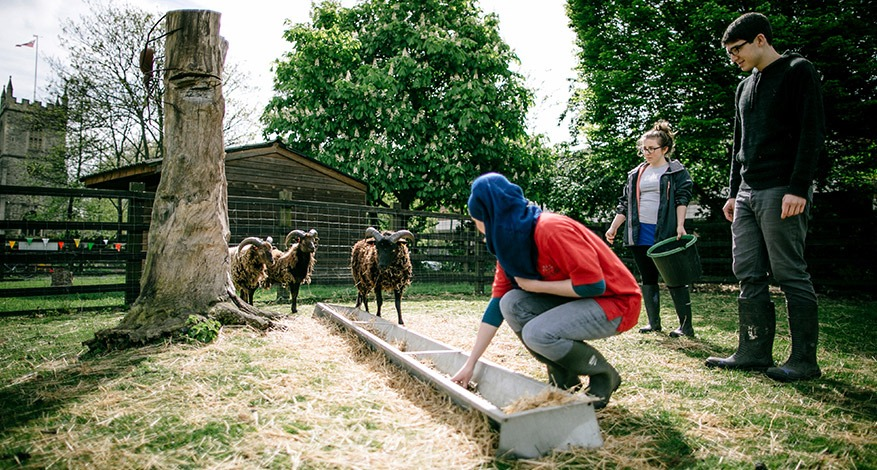 A lady feeds a sheep at Stepney City Farm