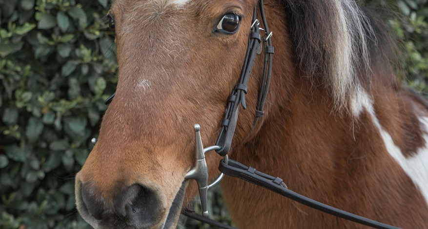 A horse at the diamond centre that provides horse riding therapy
