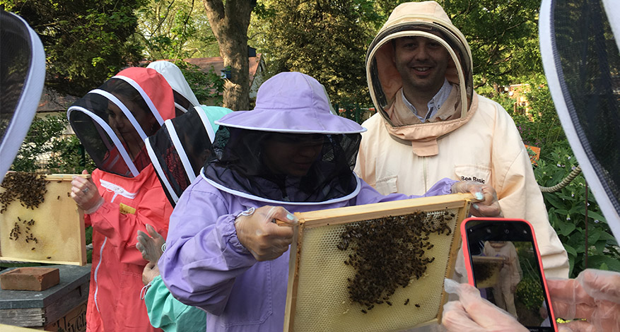 People bee-keeping at bee urban charity